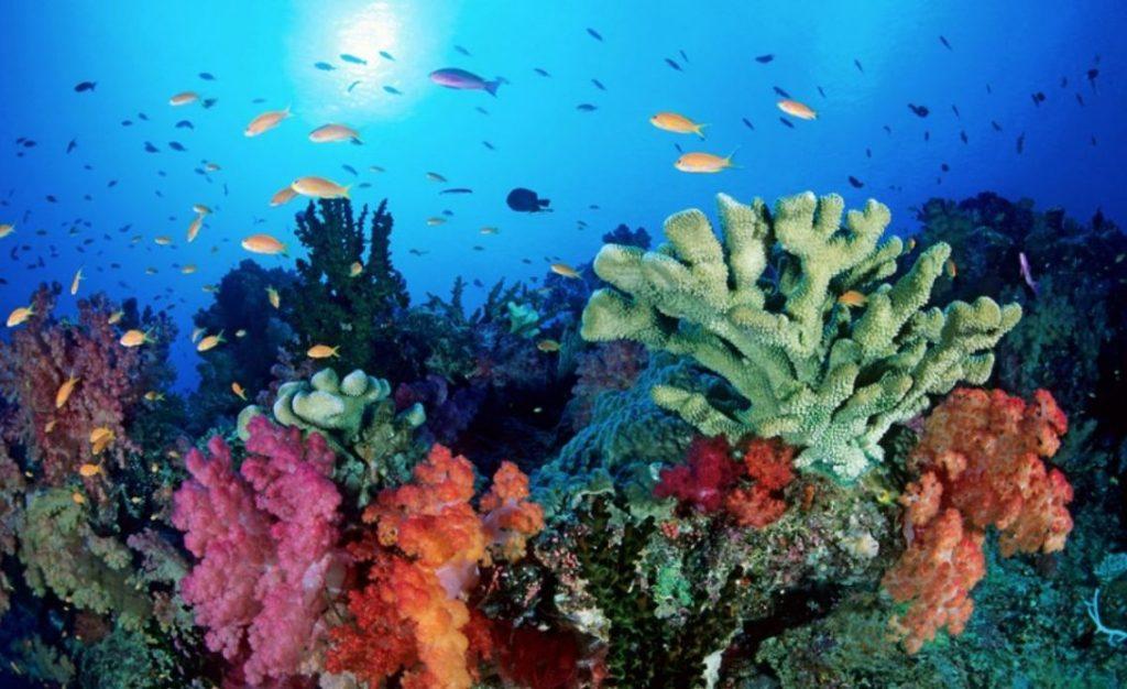 ecosistema-marino